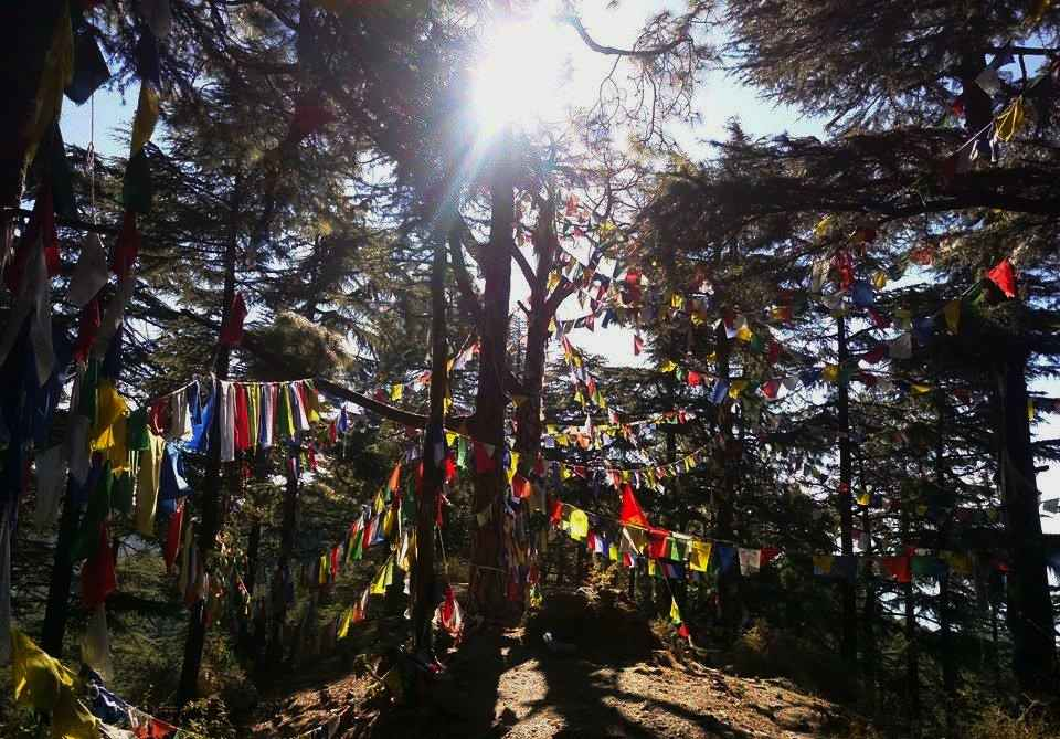 Prayer Flags at Dharamkot