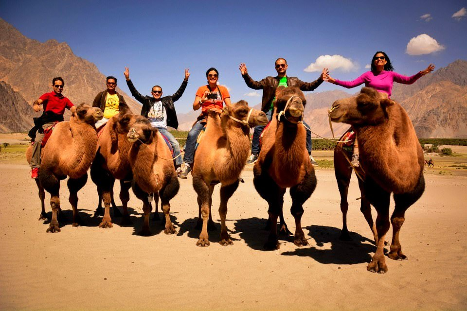 bactrian camel ride